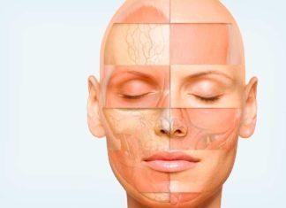Анатомия мышц лица и шеи