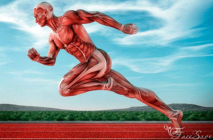 Топ самых-самых мышц человека
